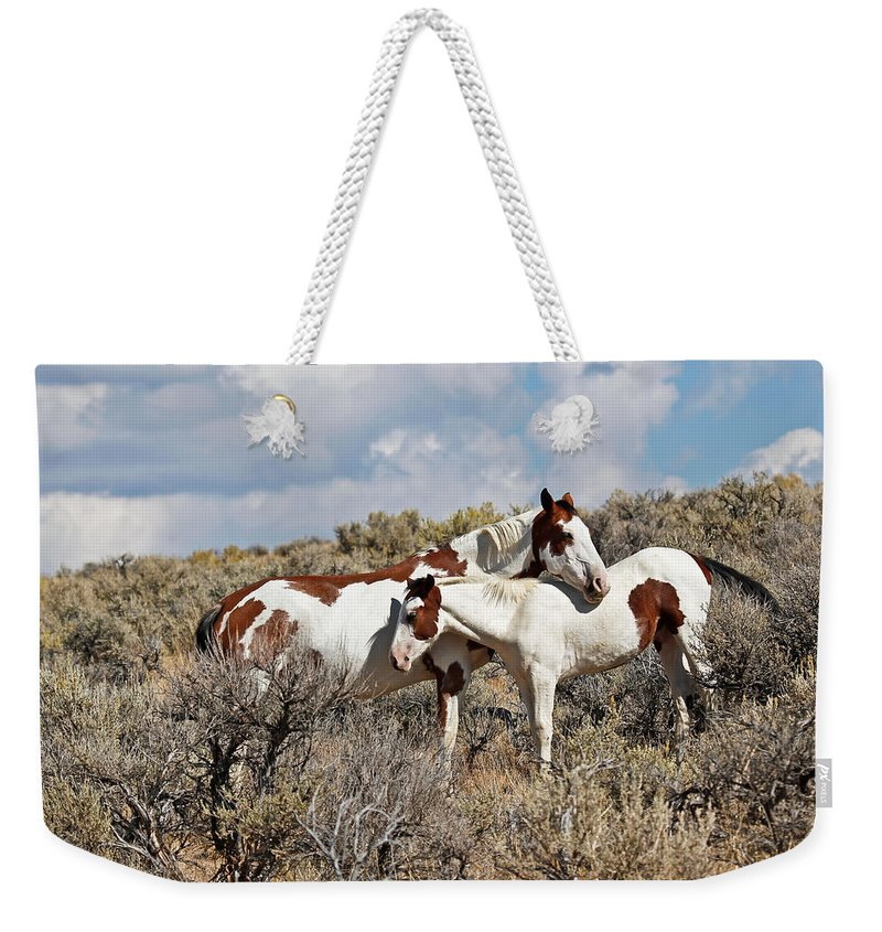 Horses Weekender Tote Bag featuring the photograph Take Me As I Am by Athena Mckinzie