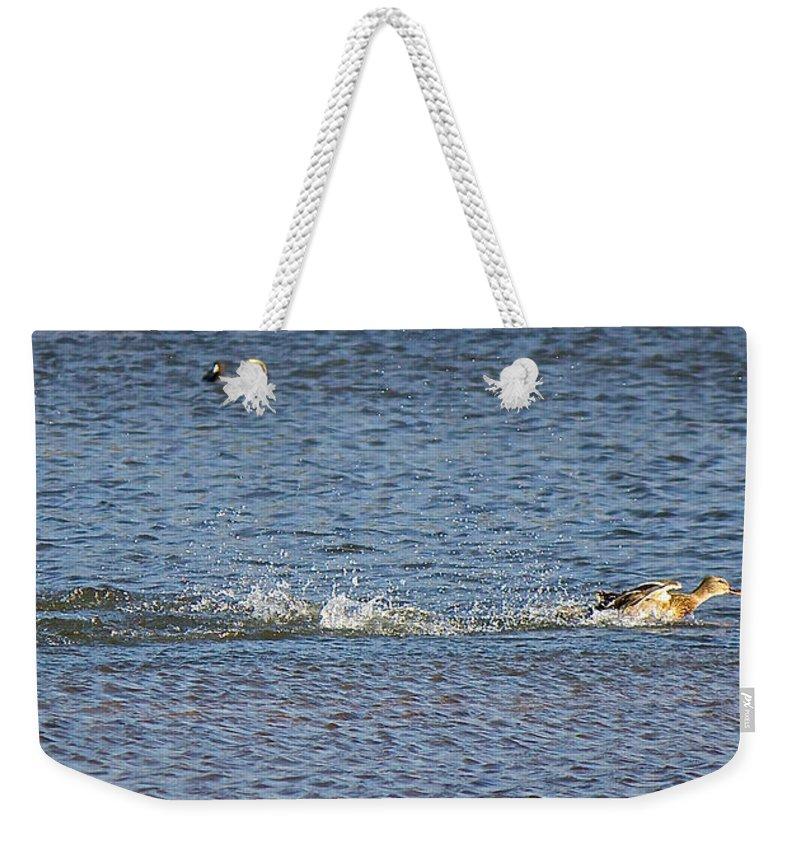 Lake Weekender Tote Bag featuring the photograph Takeoff by Ken Kobe