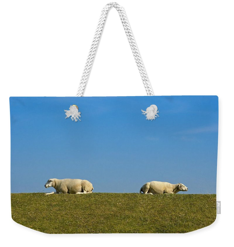 Sheep Weekender Tote Bag featuring the photograph Taking A Break by Peter Lloyd
