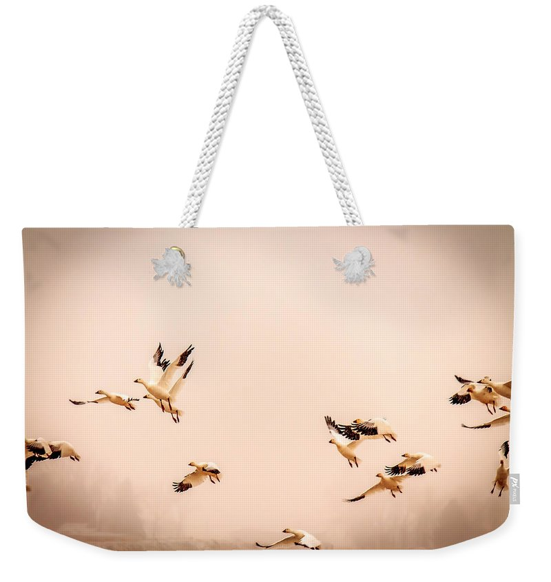 Snow Geese Weekender Tote Bag featuring the photograph Taking Flight by John Lee