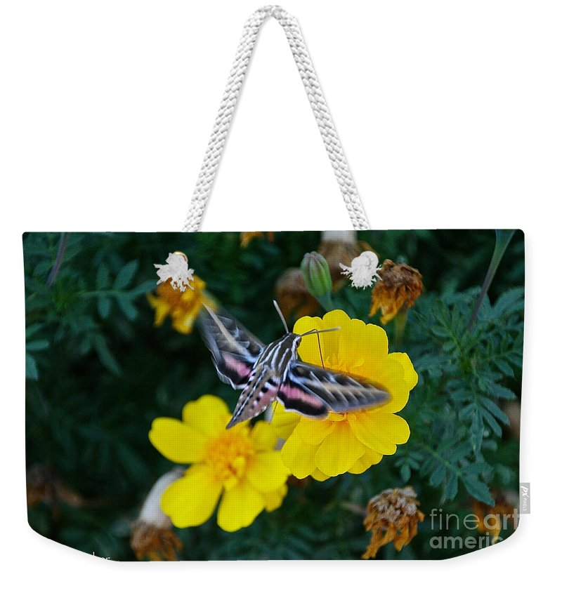 Butterfly Moth Weekender Tote Bag featuring the photograph Taking Flight by Susan Herber