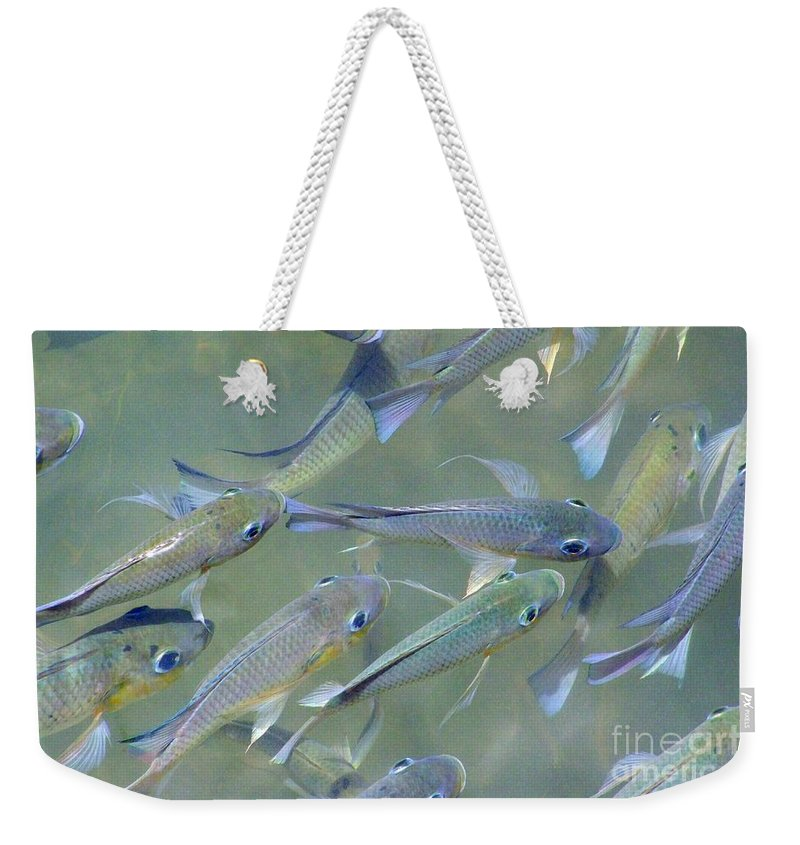Fish Weekender Tote Bag featuring the photograph Talapia At Dawn by Mary Deal
