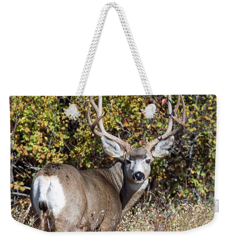 Mule Deer Weekender Tote Bag featuring the photograph Tall And Handsome by Jack Bell