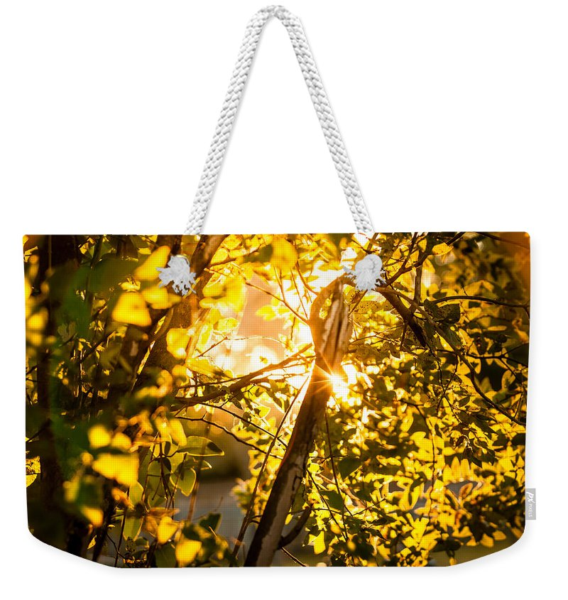 2014 Weekender Tote Bag featuring the photograph Tangled Flare by Melinda Ledsome