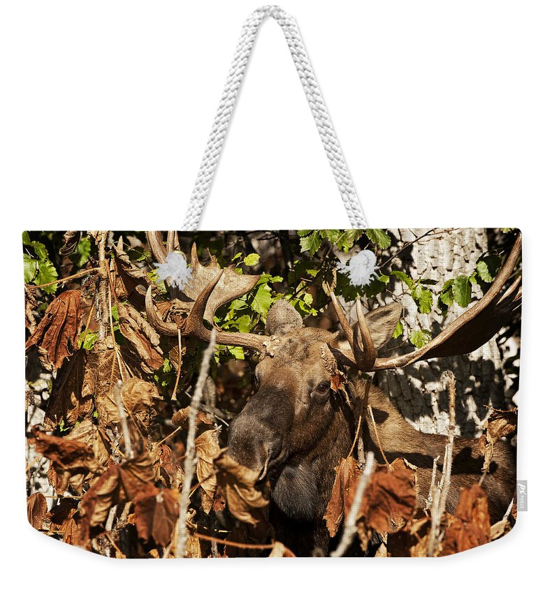 Moose Weekender Tote Bag featuring the photograph Tangled Up by Ted Raynor