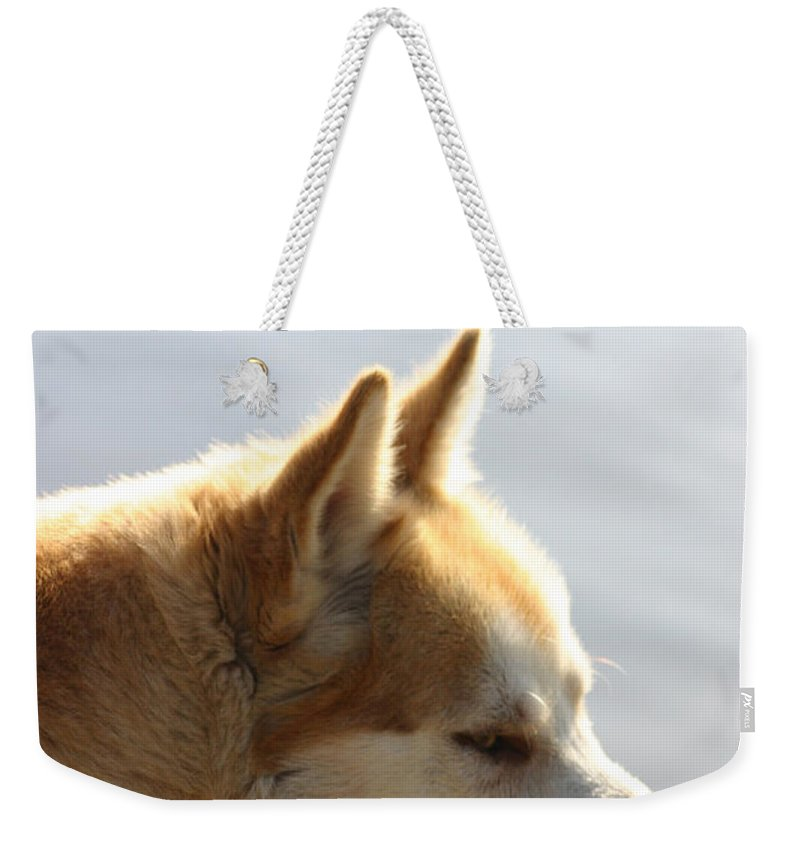Ny Weekender Tote Bag featuring the photograph Tanka - Husky by Ericamaxine Price