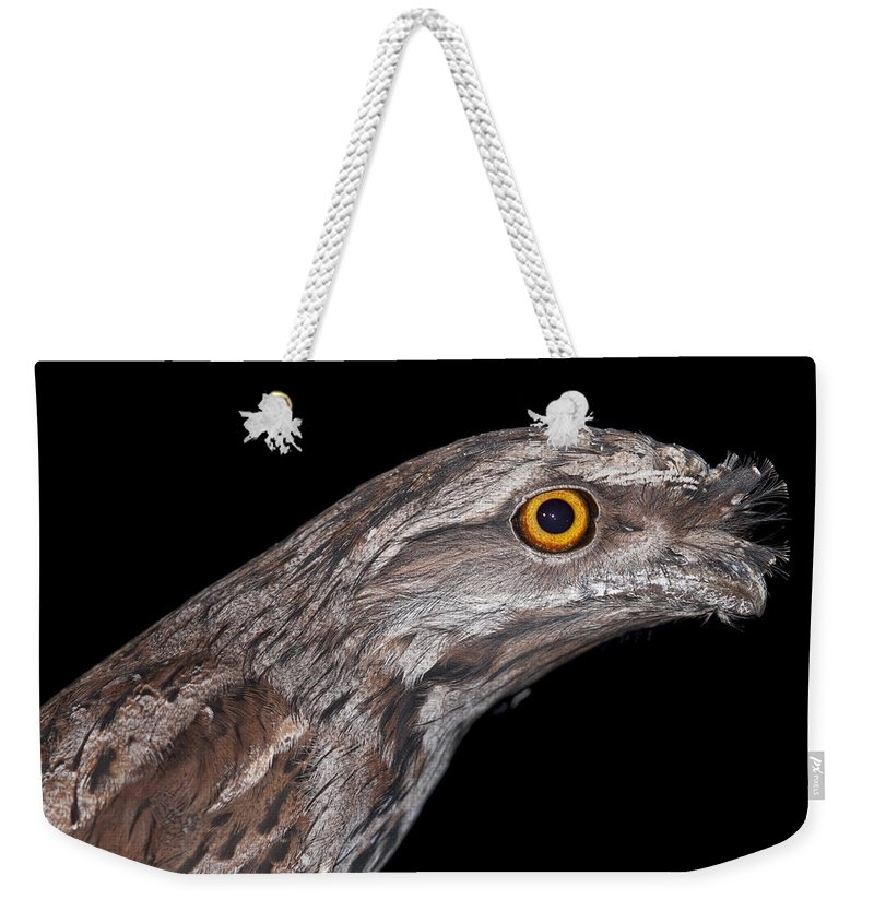 Bird Weekender Tote Bag featuring the photograph Tawny Frogmouth by Michelle Wrighton