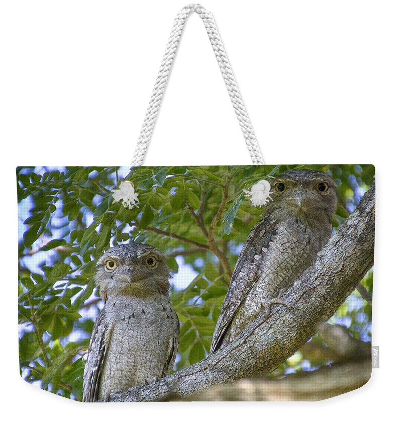 Tawny Frogmouths Weekender Tote Bag featuring the photograph Tawny Frogmouths by Douglas Barnard