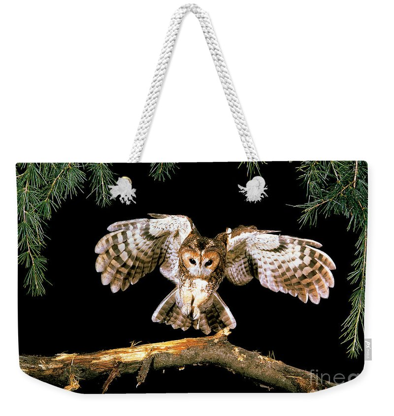Tawny Owl Weekender Tote Bag featuring the photograph Tawny Owl by Stephen Dalton