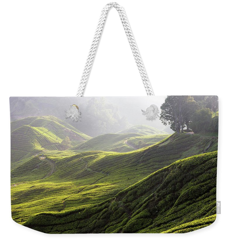 Tranquility Weekender Tote Bag featuring the photograph Tea Estate by Daniel Osterkamp
