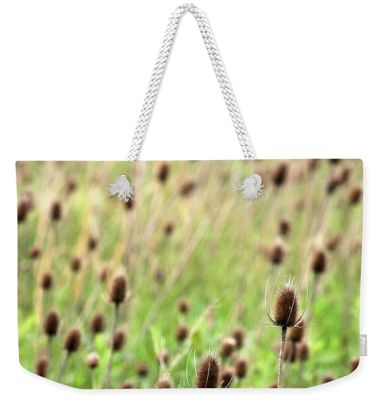 Thistle Weekender Tote Bag featuring the photograph Teasel Meadow by Angela Rath