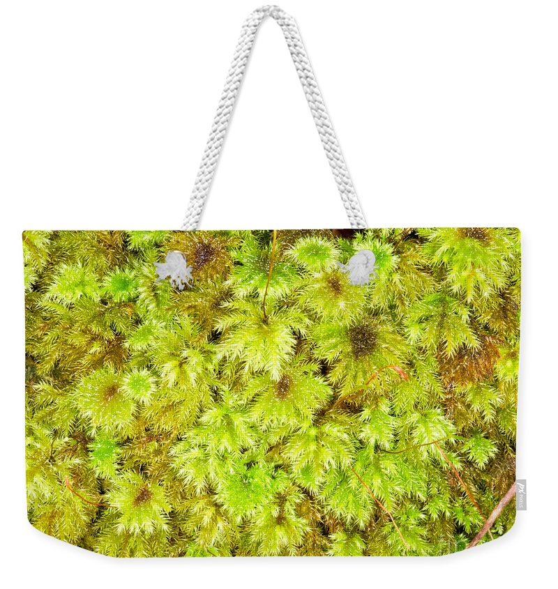 Abstract Weekender Tote Bag featuring the photograph Tender Fresh Green Moss Background Texture Pattern by Stephan Pietzko
