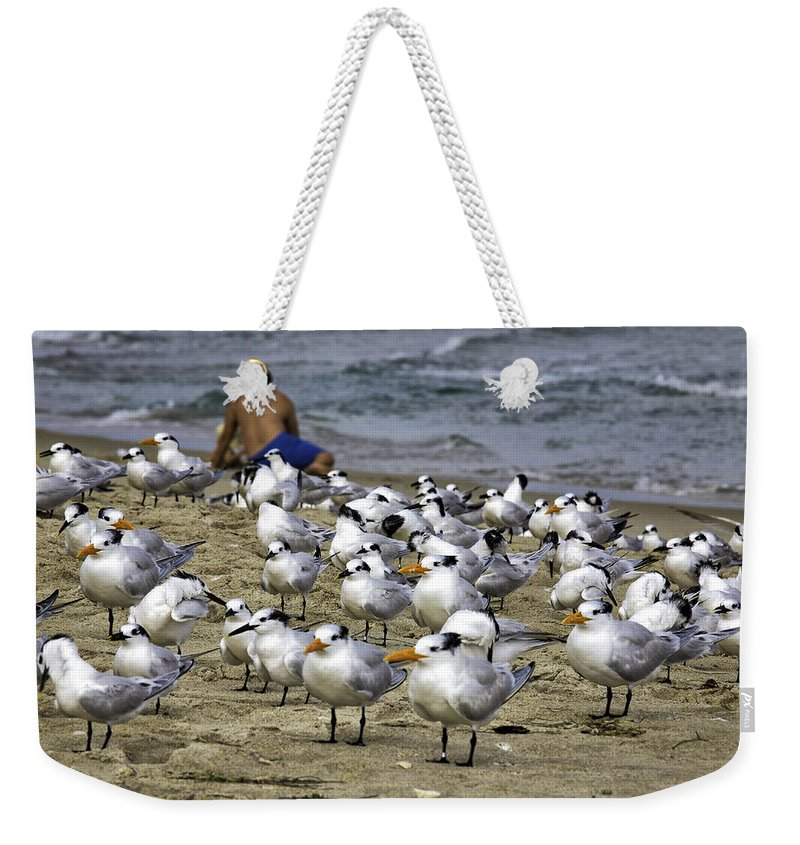 Landscape Weekender Tote Bag featuring the photograph Terns by Fran Gallogly