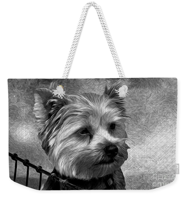 Playing With Light Weekender Tote Bag featuring the photograph Terrier - Dog - Playing With Light by Liane Wright