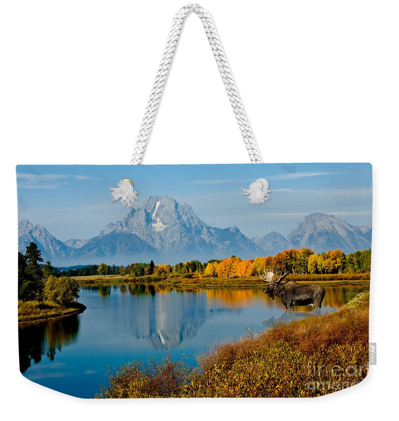 Outdoors Weekender Tote Bag featuring the photograph Tetons With Moose by Anthony Mercieca