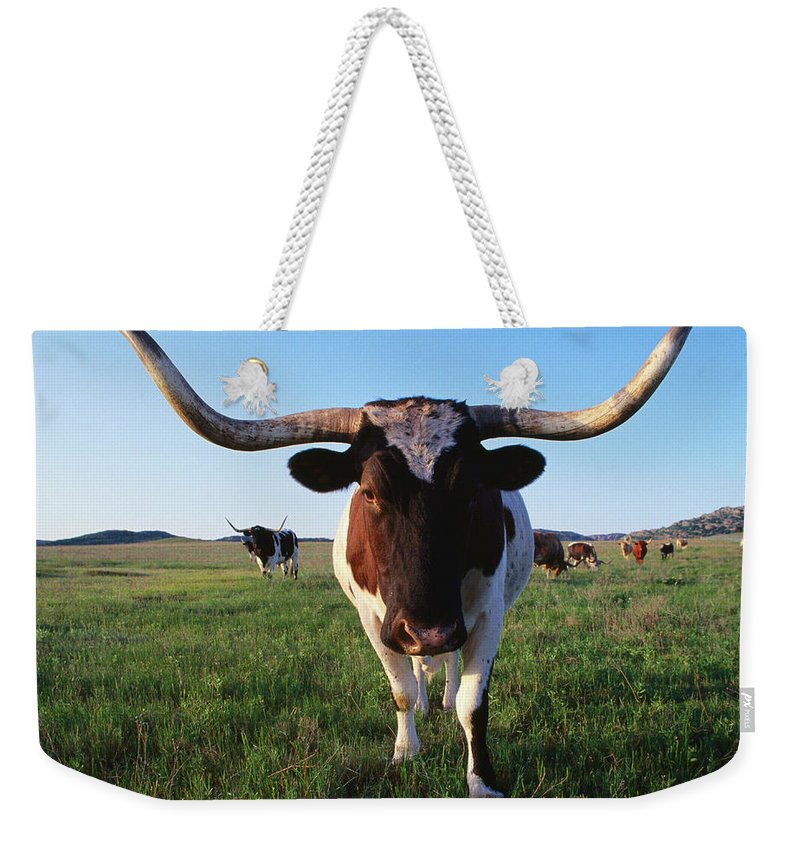 Horned Weekender Tote Bag featuring the photograph Texas Longhorn Cattle by John Elk