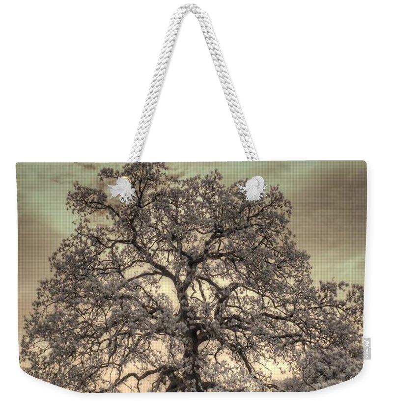 Texas Oak Weekender Tote Bag featuring the photograph Texas Oak Tree by Jane Linders