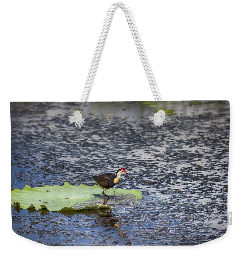 Esus Christ Bird Weekender Tote Bag featuring the photograph That Sinking Feeling by Douglas Barnard