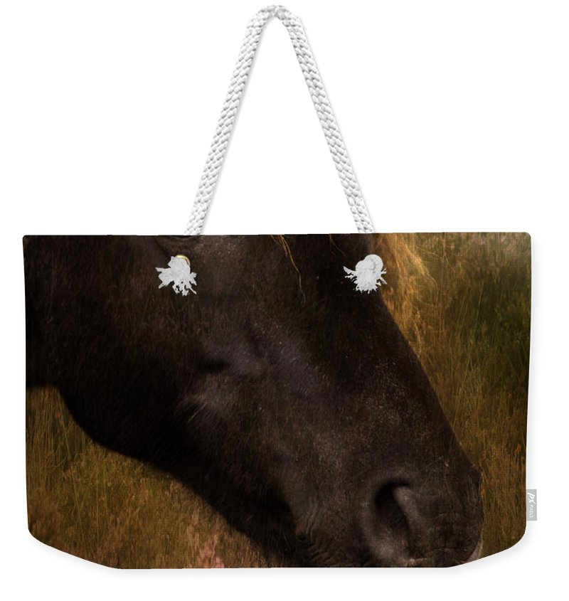Pony Weekender Tote Bag featuring the photograph that Wild Look by Angel Ciesniarska