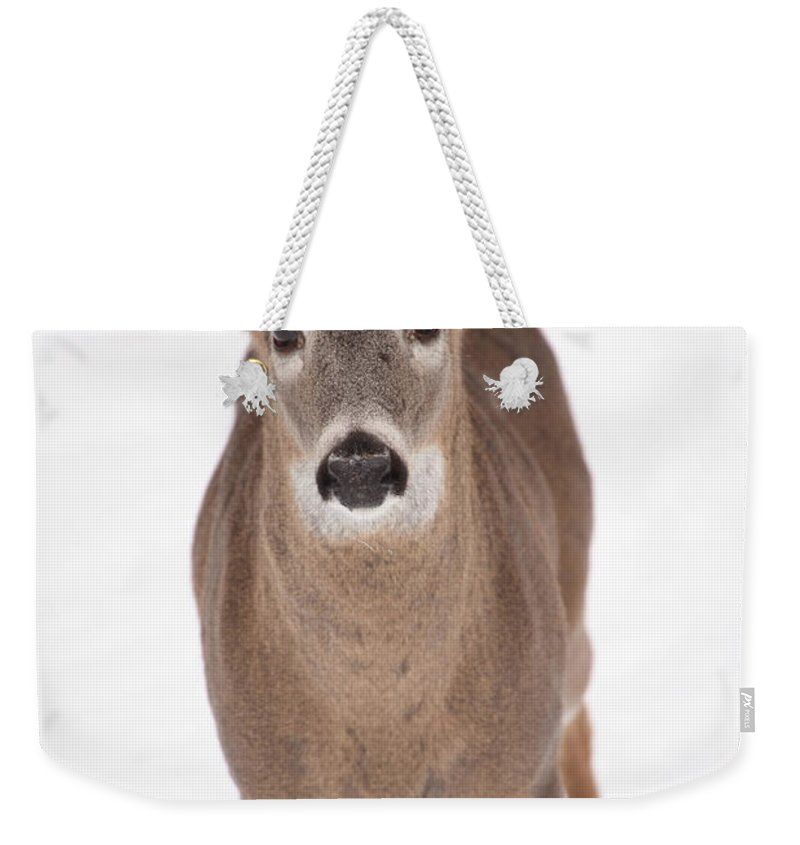Buck Weekender Tote Bag featuring the photograph The Buck Stops Here by Karol Livote