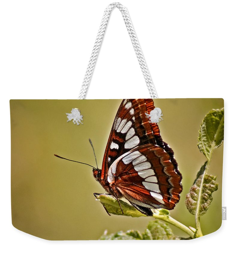 Bugs Weekender Tote Bag featuring the photograph The Butterfly by Ernie Echols