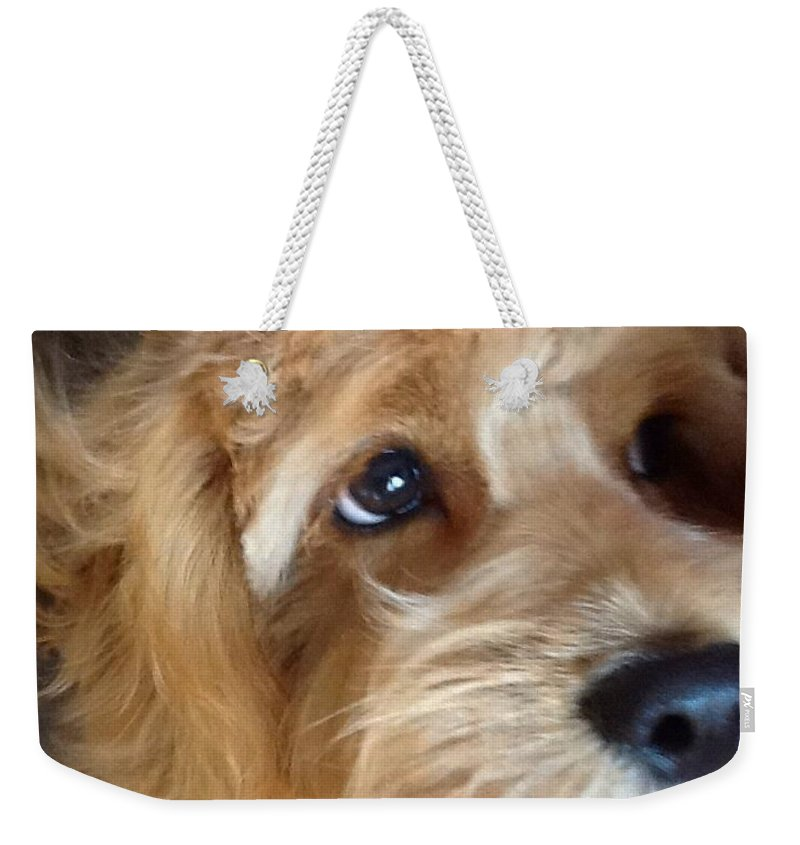 Closeup Weekender Tote Bag featuring the photograph The Closeup by Christy Gendalia
