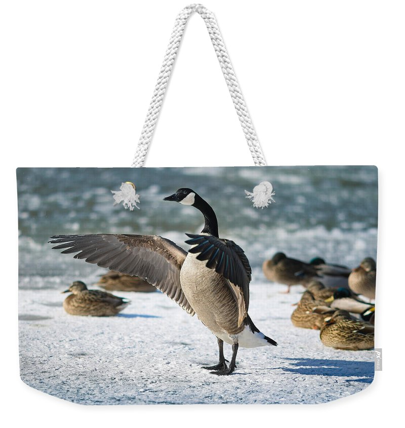 Canada Goose Photographs Weekender Tote Bags