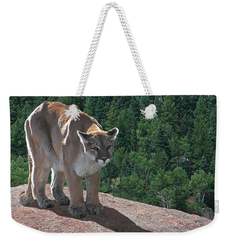 Cats Weekender Tote Bag featuring the digital art The Cougar 1 by Ernie Echols