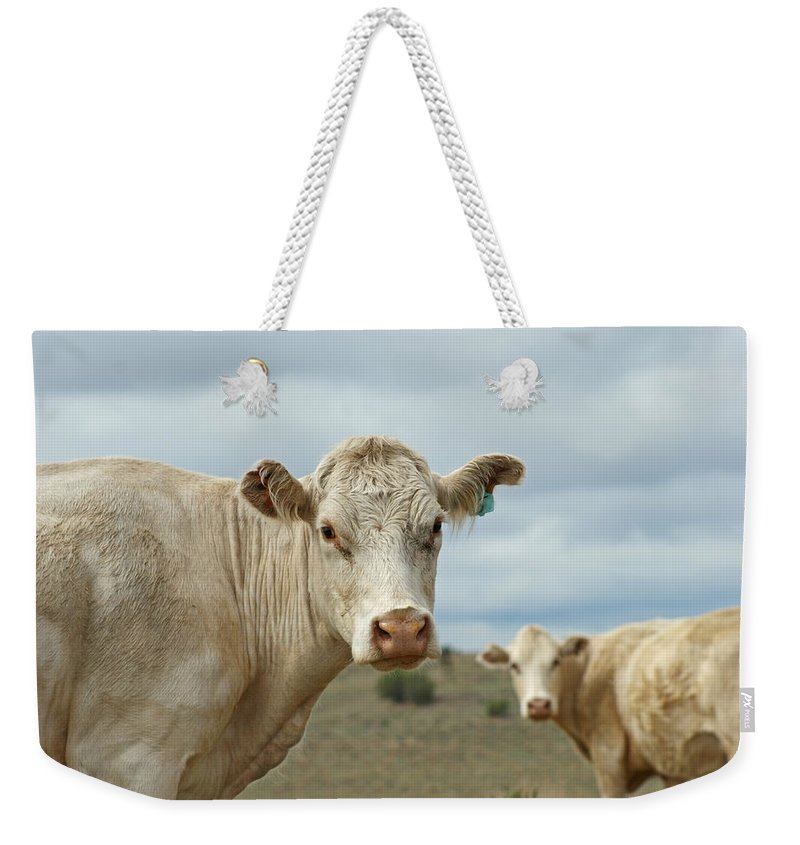 Cow Weekender Tote Bag featuring the photograph The Cows by Ernie Echols