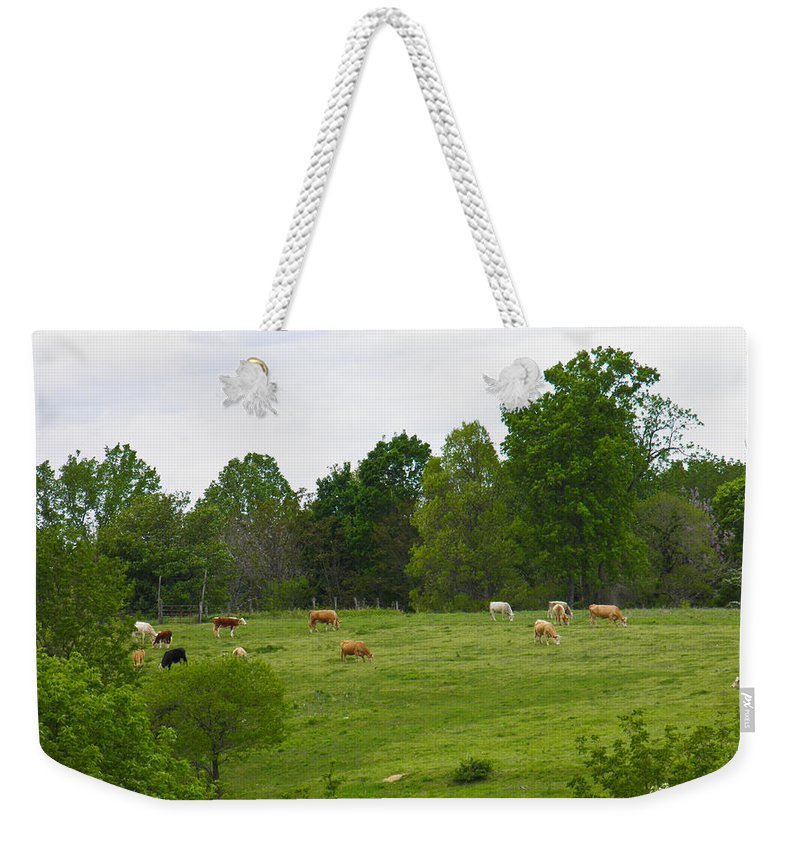 Cattle Weekender Tote Bag featuring the photograph The Cows Of May by Nick Kirby