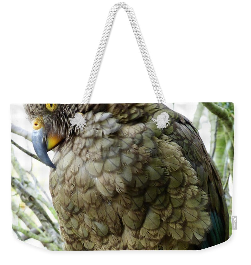 Kea Weekender Tote Bag featuring the photograph The Crafty Kea by Steve Taylor