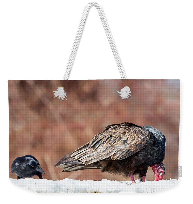 Vulture Weekender Tote Bag featuring the photograph The Crow And Vulture by Bill Wakeley