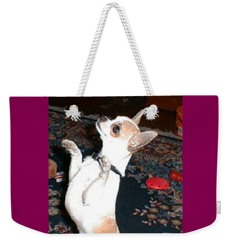Chihuahua Weekender Tote Bag featuring the photograph The Dance by Leah Delano