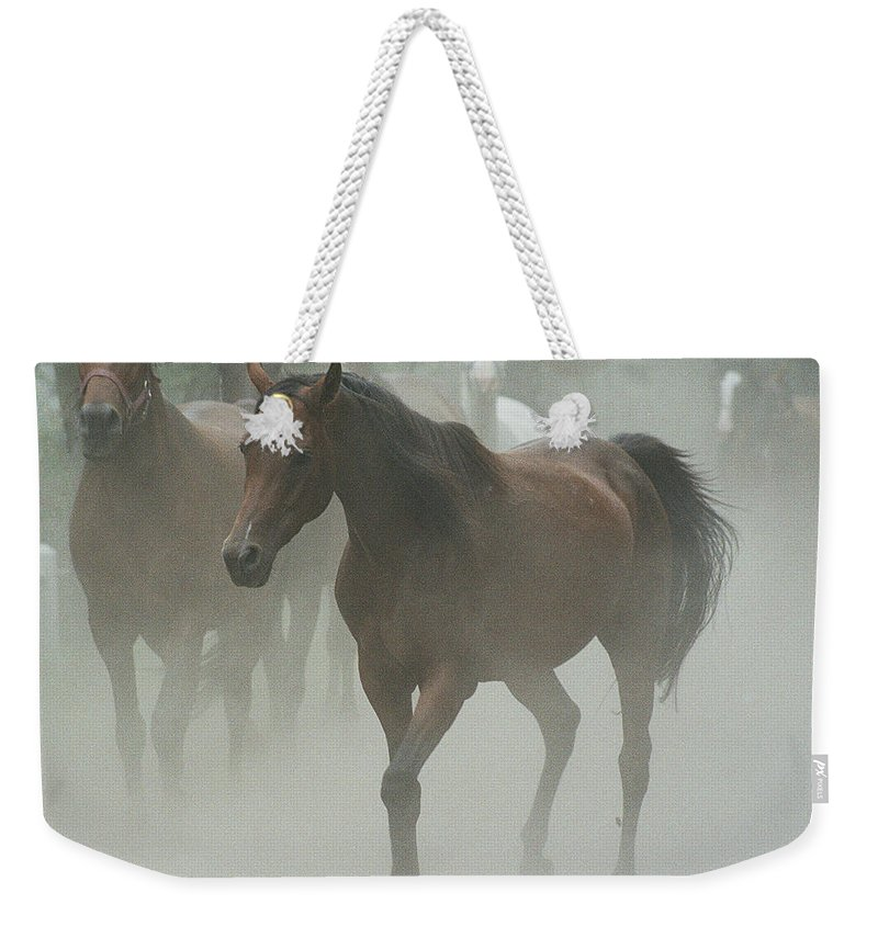 Arabian Horse Weekender Tote Bag featuring the photograph The Daughters Of A Desert by Angel Ciesniarska