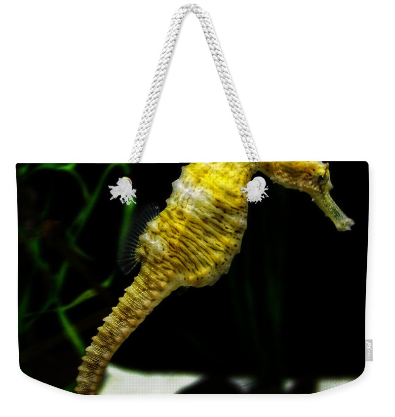 Longsnout Seahorse Weekender Tote Bag featuring the photograph The Derby by Nishanth Gopinathan