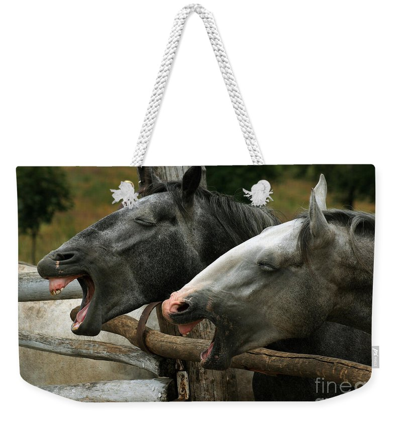 Horses Weekender Tote Bag featuring the photograph the double Yawn by Angel Ciesniarska