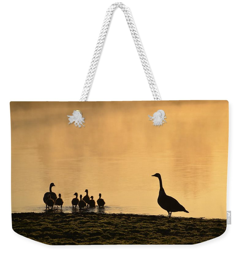 Family Weekender Tote Bag featuring the photograph The Family by Bill Cannon