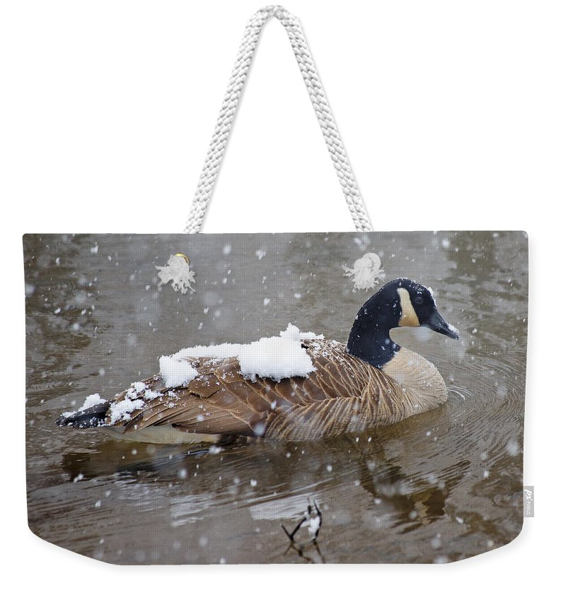 Canadian Weekender Tote Bag featuring the photograph The Flurry Collector by Betsy Knapp