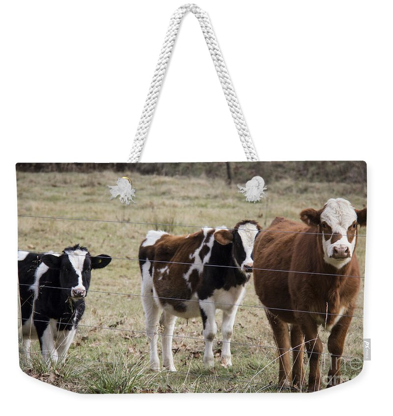 Cow Weekender Tote Bag featuring the photograph The Gallery by Teresa Mucha