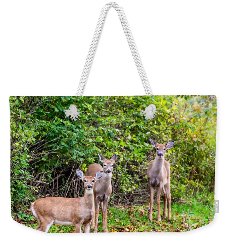 Weekender Tote Bag featuring the photograph The Girls by Steve Harrington