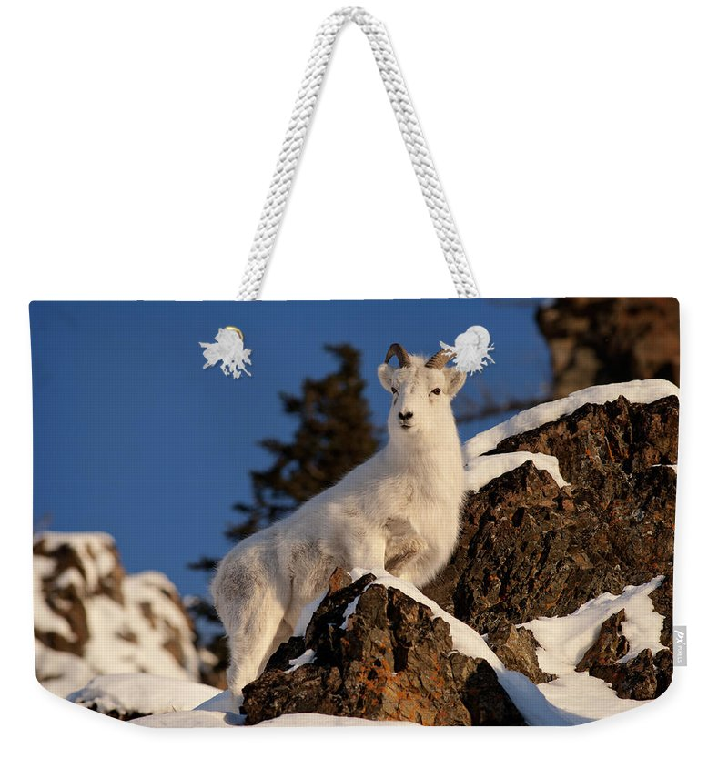 Ovis Dalli Weekender Tote Bag featuring the photograph The High Ground by Ted Raynor