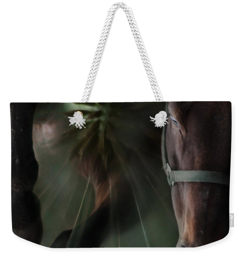 Abstract Weekender Tote Bag featuring the photograph The Horse And The Dandelion by Angel Ciesniarska