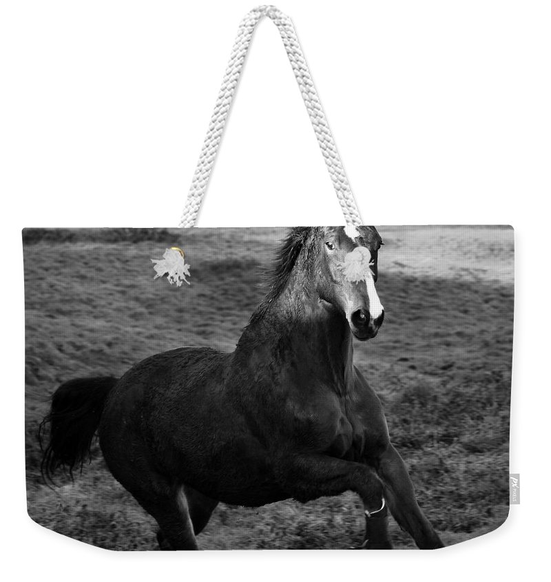 Horse Weekender Tote Bag featuring the photograph The Horse by Angel Ciesniarska