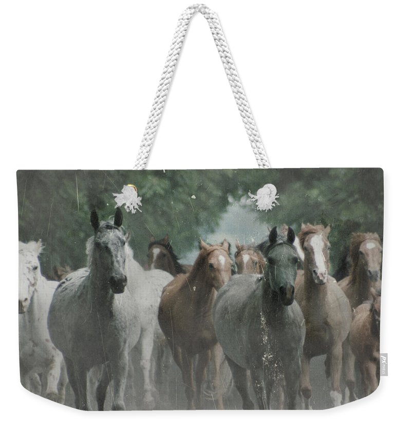 Arabian Weekender Tote Bag featuring the photograph The Horsechestnut Tree Avenue by Angel Ciesniarska