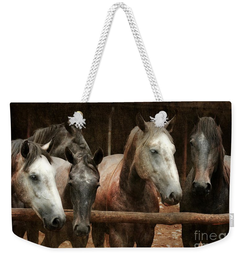Horse Weekender Tote Bag featuring the photograph The Horses by Angel Ciesniarska
