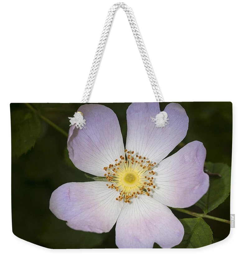 Dog Rose Weekender Tote Bag featuring the photograph The Humble Dog Rose by Richard Thomas