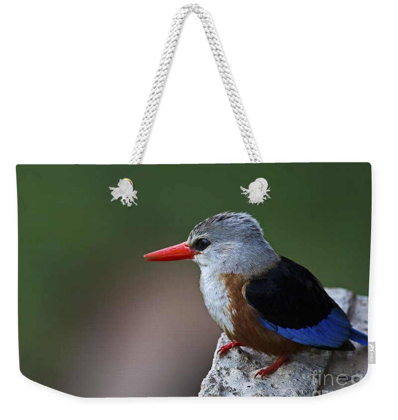 Festblues Weekender Tote Bag featuring the photograph The King Of Fishing... by Nina Stavlund