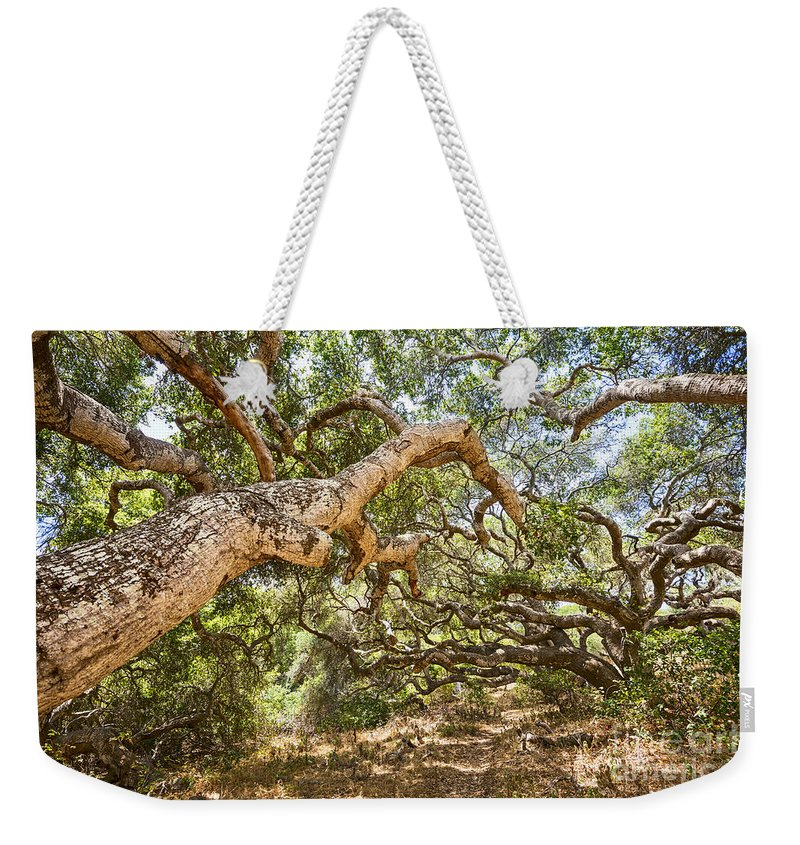 Los Osos Oak State Natural Reserve Weekender Tote Bag featuring the photograph The Life Of Oaks - The Magical Trees Of The Los Osos Oak Reserve by Jamie Pham