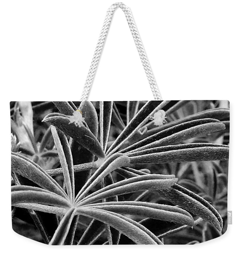Leaf Weekender Tote Bag featuring the photograph The Light Catchers by Steve Taylor