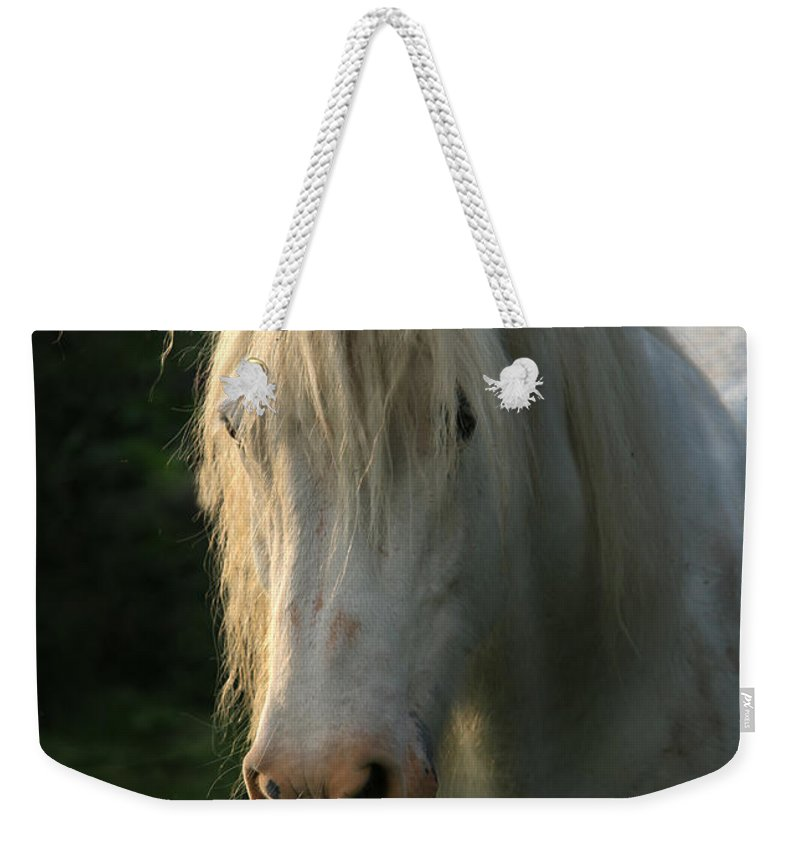 Unicorn Weekender Tote Bag featuring the photograph The Light In The Mane by Angel Ciesniarska